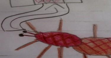 Une mygale par Florence