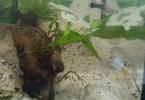 Notre élevage : l'aquarium