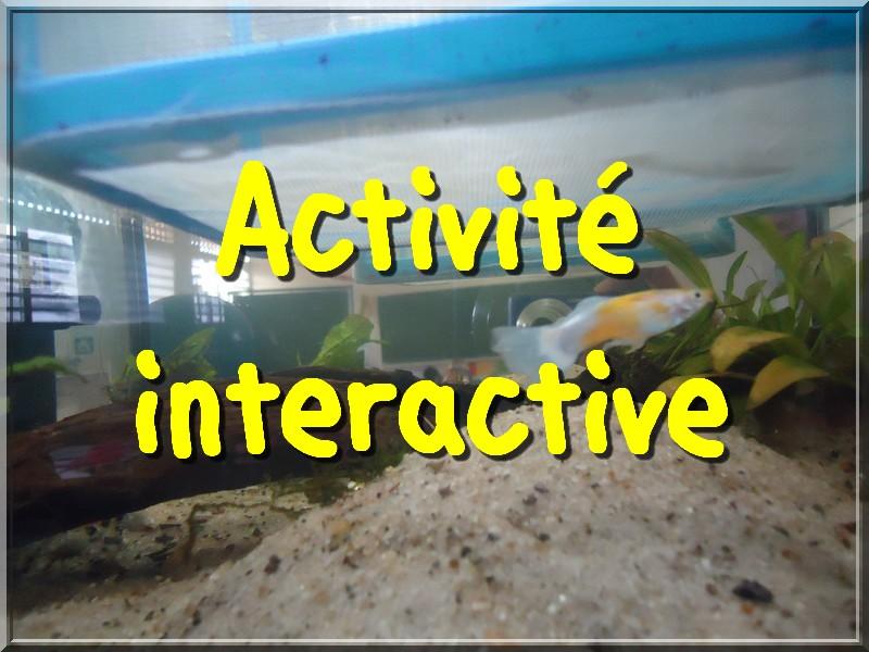 Activité_Guppy_CM1A